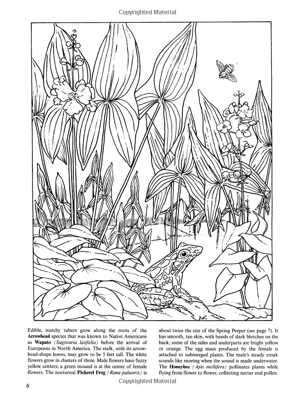 freshwater pond coloring book dover nature coloring book annika bernhard coloring books