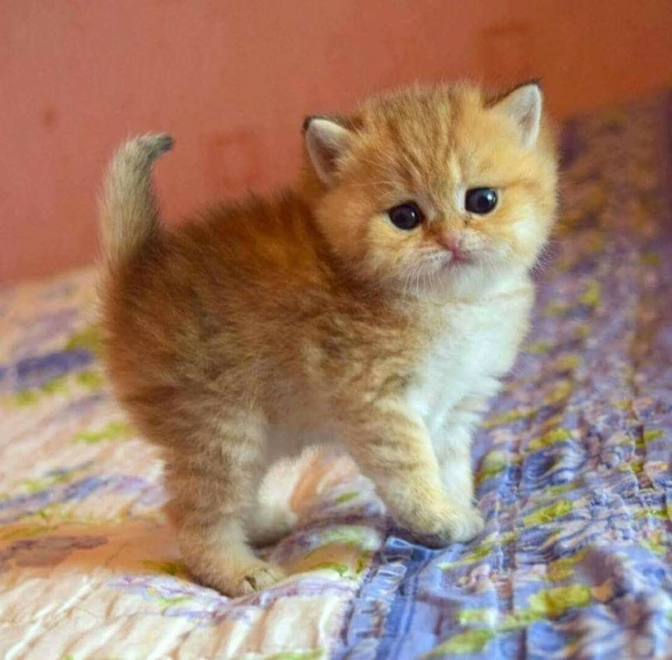 cats and more cats pinterest cat and animal