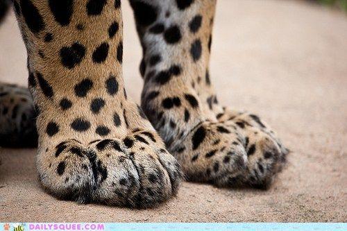 Big Kitty Feet