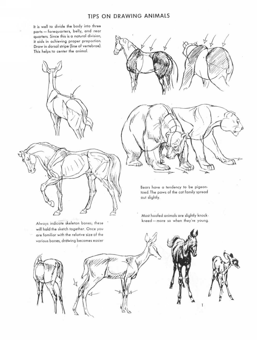 Pin by ALEX DING on Drawing   Pinterest   Animal drawings, Draw and ...