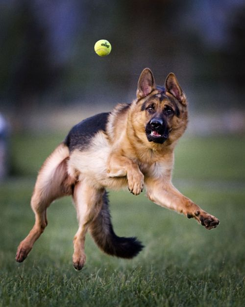 You Get That Tennis Ball Such A Great Action Shot