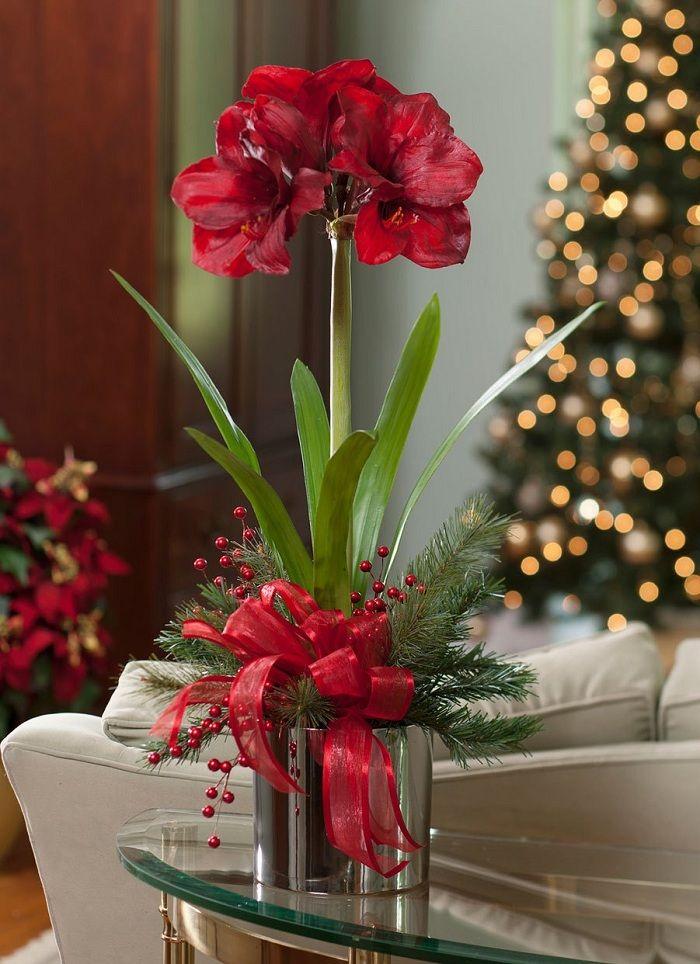 Rote Blumen Tisch Deko Ideen Schleife Amaryllis Christmas