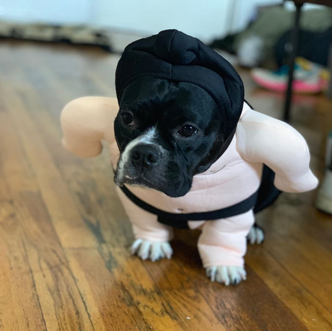 50 Dog Halloween Costumes That Are Perfect To Include Your Pup In