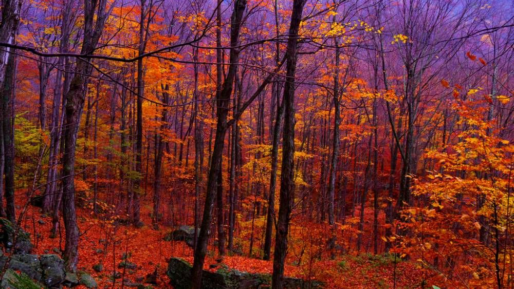 The Captivating Catskill Mountains In Fall. This is what I