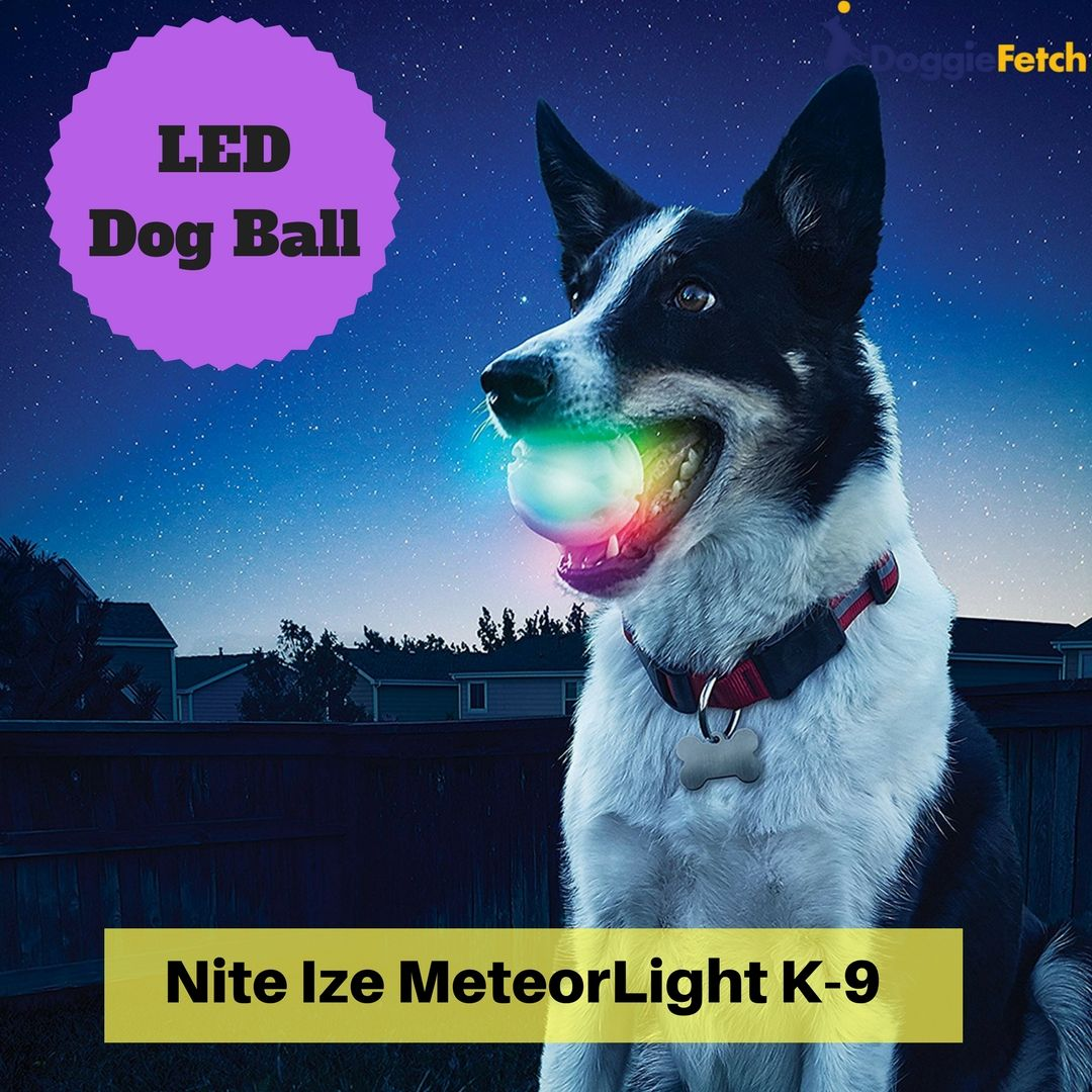 Glow In The Dark Dog Fetch Toys Buyers Guide Pet Dogs Pets Dogs