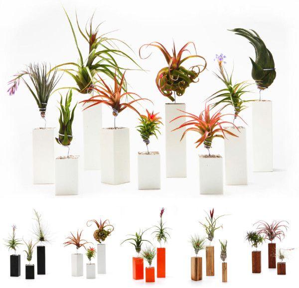 Living Wall Art Vertical Garden Frames By Airplantman Air PlantsIndoor