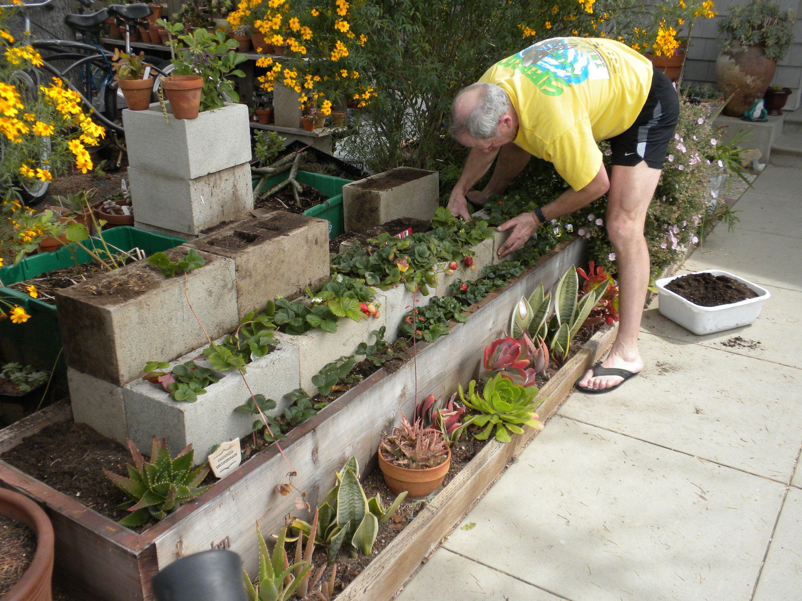 Gardening projects strawberry terrace coastal gardening in garden projects workwithnaturefo