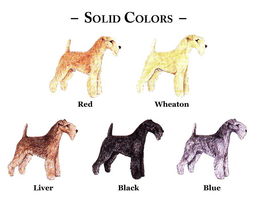 Usltc Colors Of The Lakeland Terrier Lakeland Terrier