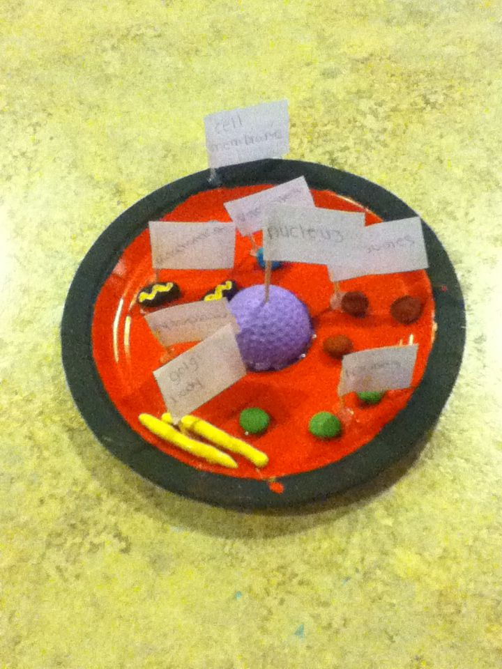 plant and animal cell essays Find and save ideas about cells 5th grade on pinterest   see more ideas about 5th grade science experiments, kid science projects and electricity experiments.