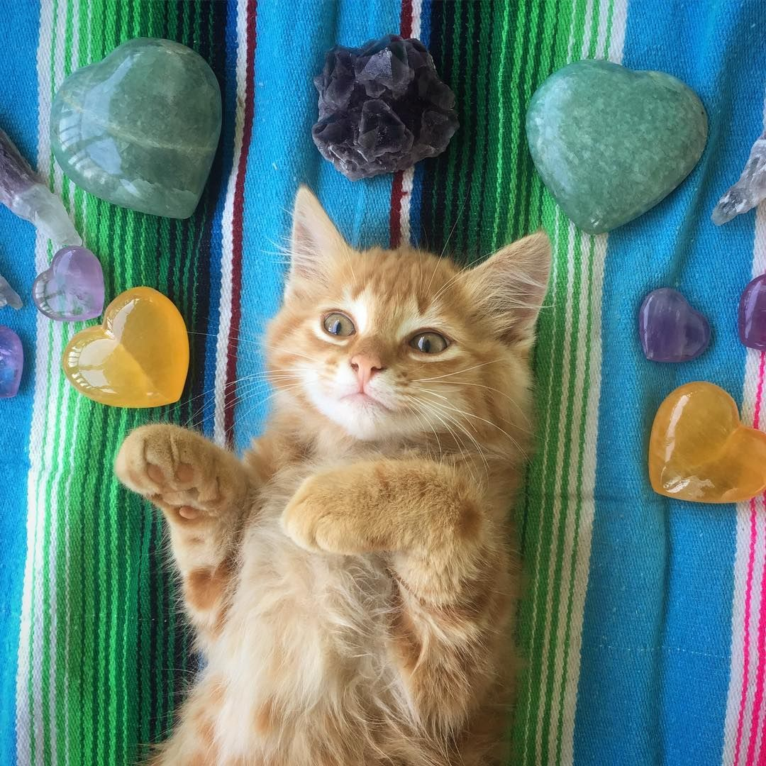Crystals And Kittens Oh My Kittens Kitty Crystals