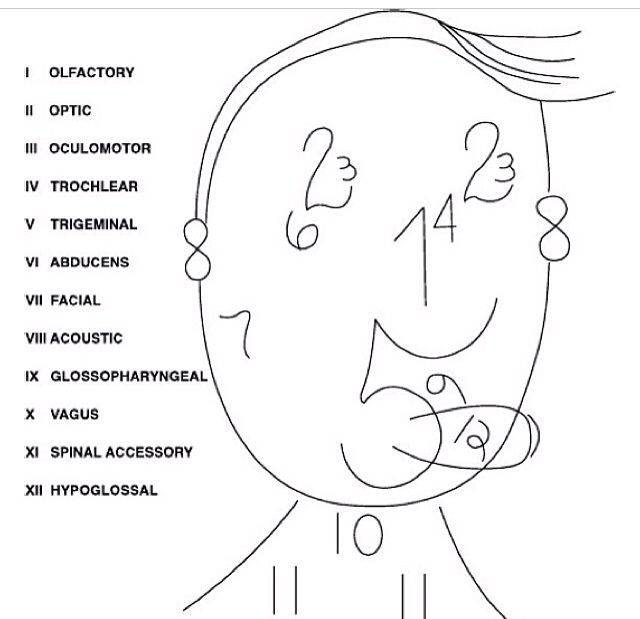 cranial nerves face - Google Search | Nurse, Nursing notes