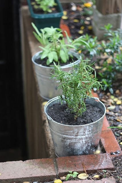 Uprooting and Transferring Herbs | 17 Apart: Uprooting and