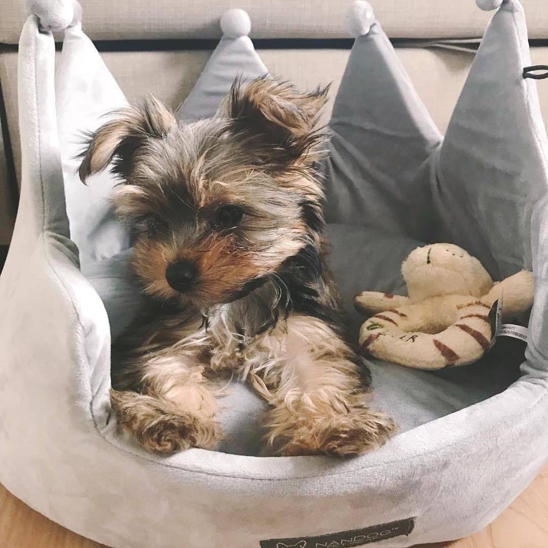 Nandog Pet Gear Crown Dog Bed, Micro Plush Light Gray