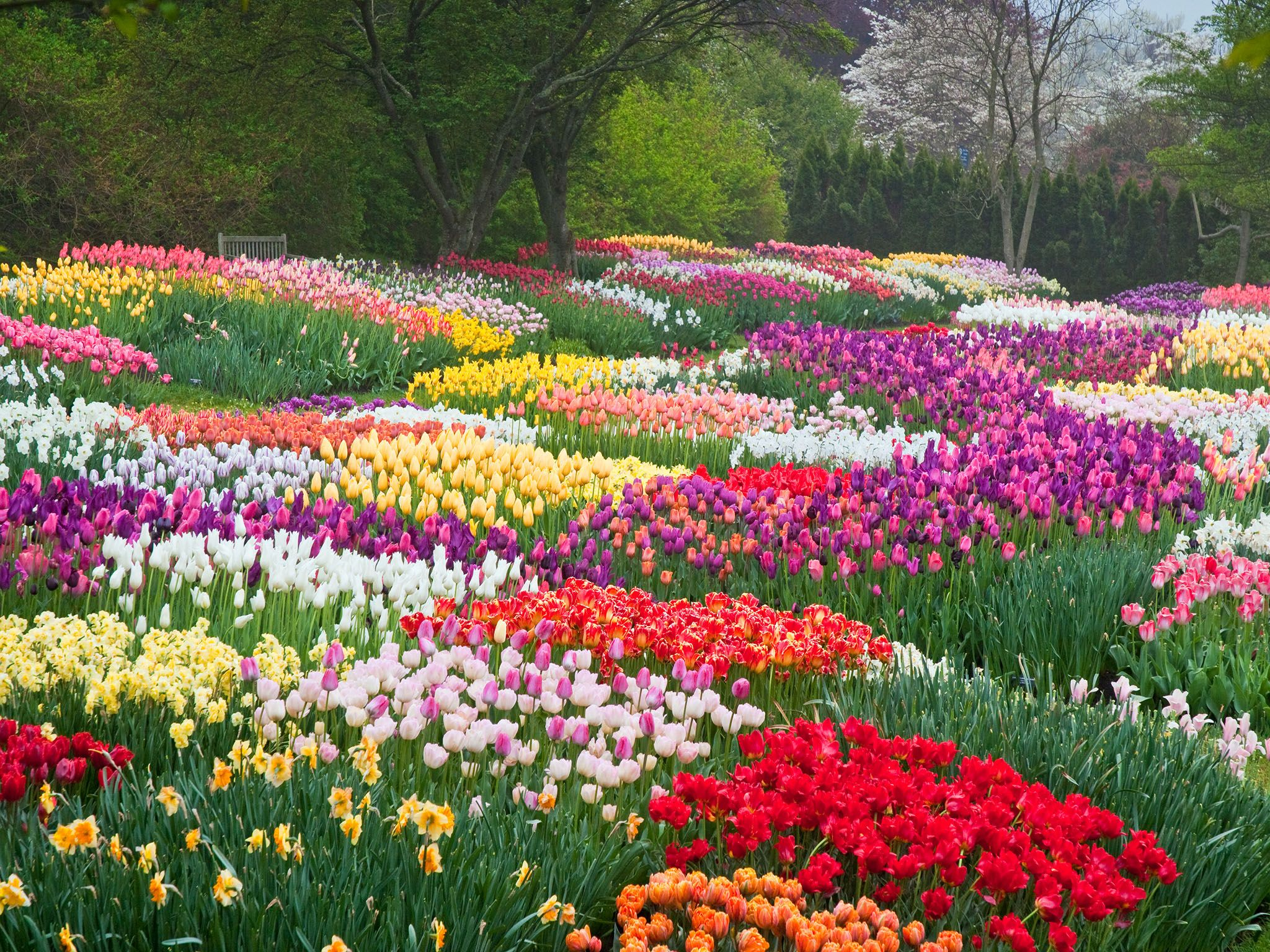 8 places to see america 39 s most beautiful spring flowers for Most beautiful garden flowers
