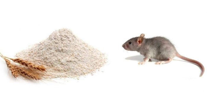Do You Have A Problem With Mice Invading Your Home Or Your Garage Whatever Your Situation Is It Is Of Crucia Getting Rid Of Mice Mice Repellent Home Recipes