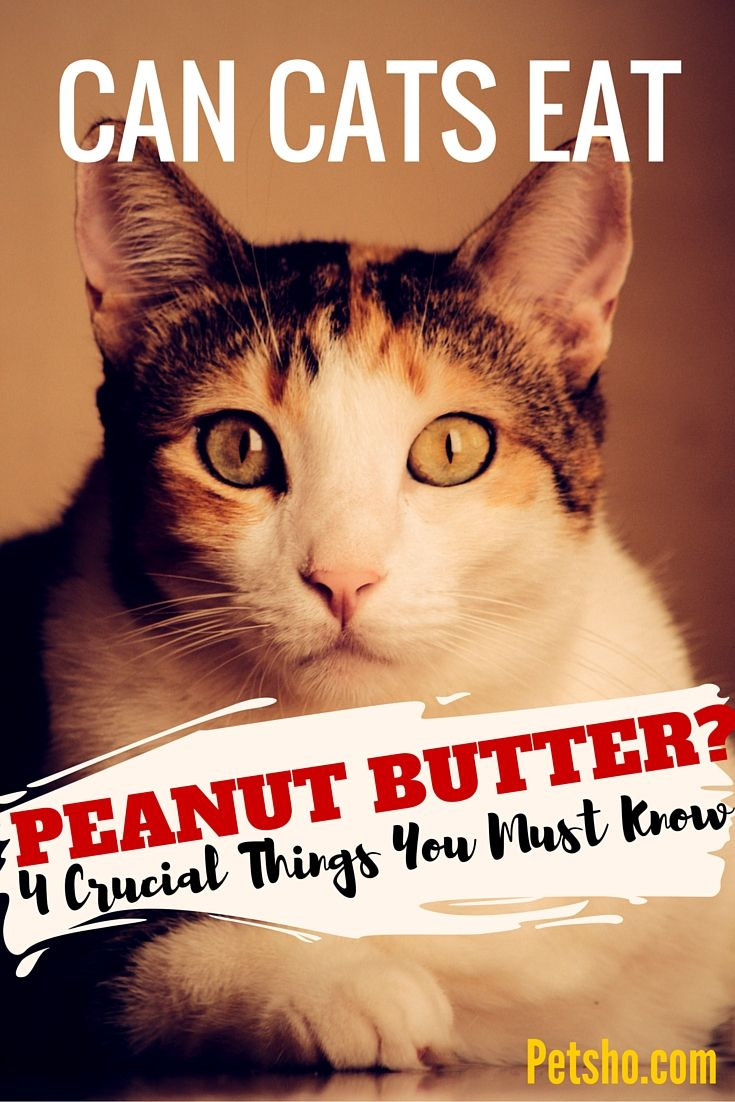 Pin by Janice Derbes on Pets Cats, Peanut butter, Canning
