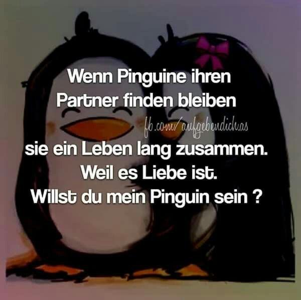 willst DU mein Pinguin sein?   Bilder mit Sprüchen