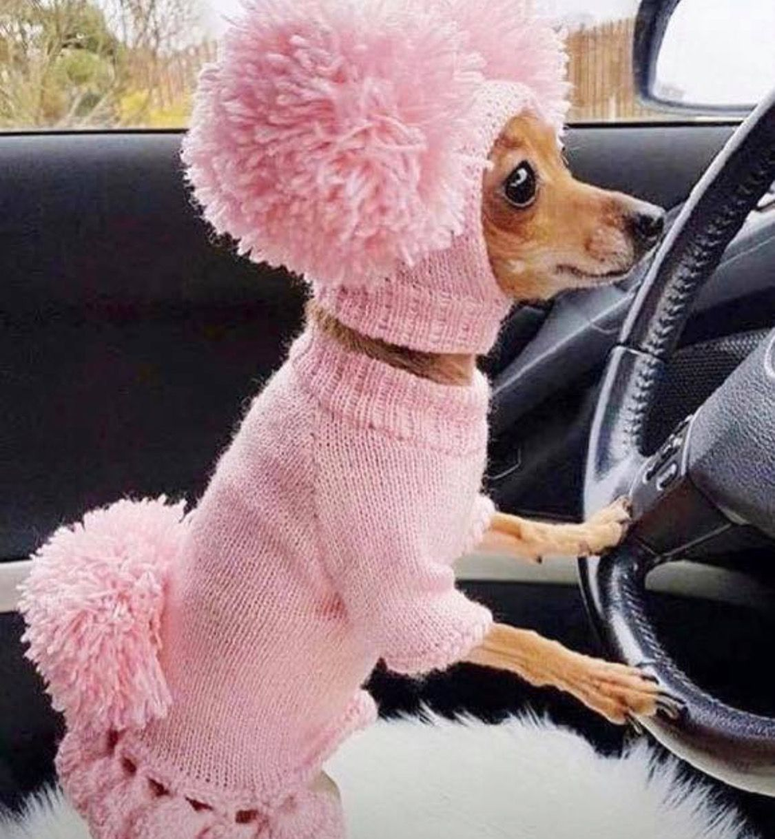 OMG, so funny my sister driving car Cute baby animals