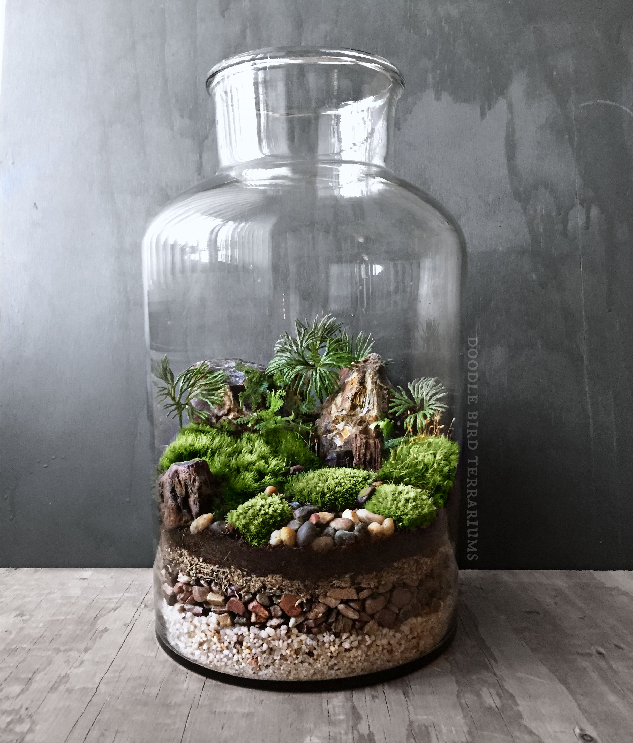 un vrai paysage miniature pour cet imposant terrarium cr dit photo doodle bird terrariums. Black Bedroom Furniture Sets. Home Design Ideas