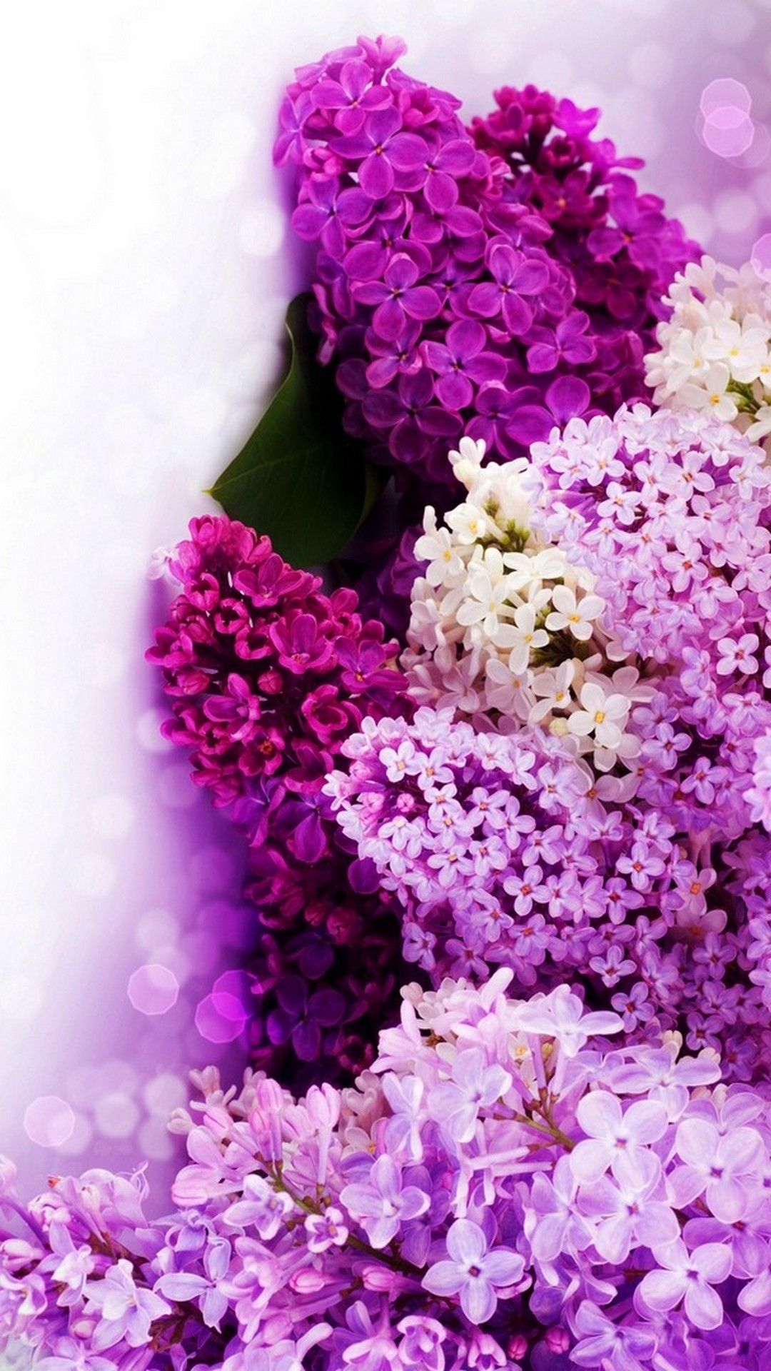 Purple Flowers Background For Android Best Hd Wallpapers Purple Flowers Wallpaper Purple Flower Background Flower Backgrounds