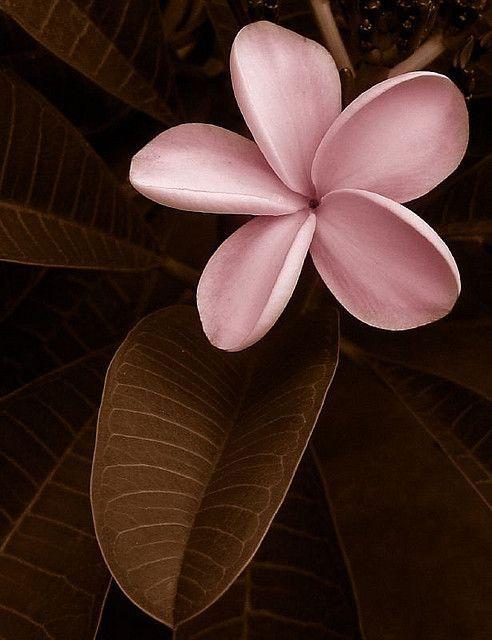 Couleur Rose Et Brun Pink Things Pinterest Fleurs
