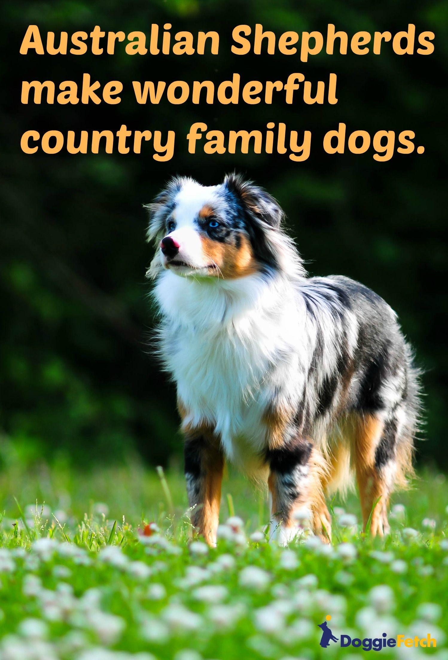 The Best Dog Breeds for Rural Living Best dog breeds