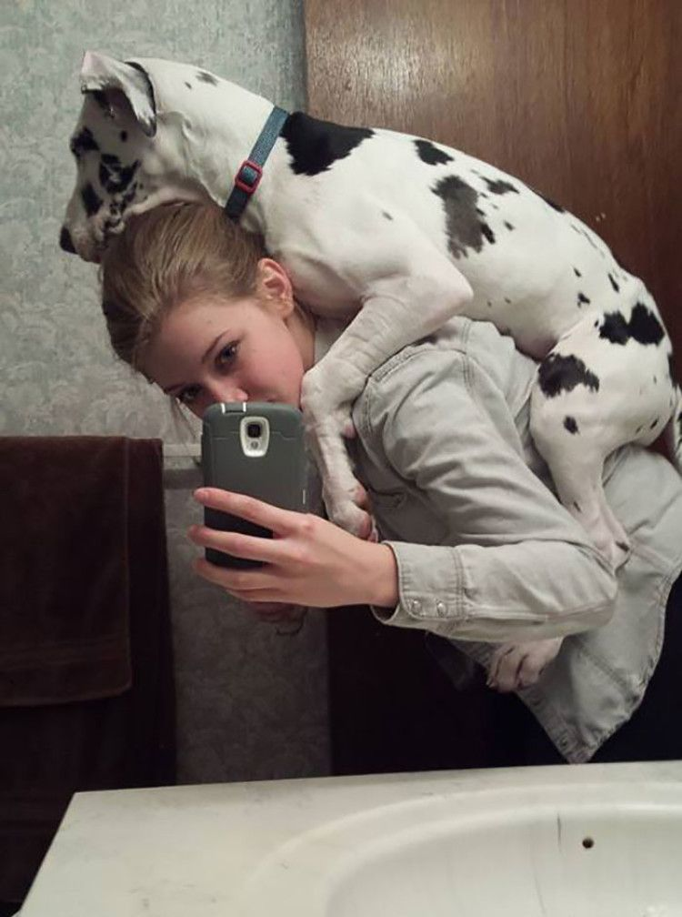 People Are Posting Hilarious Photos Of Their Great Danes And It S