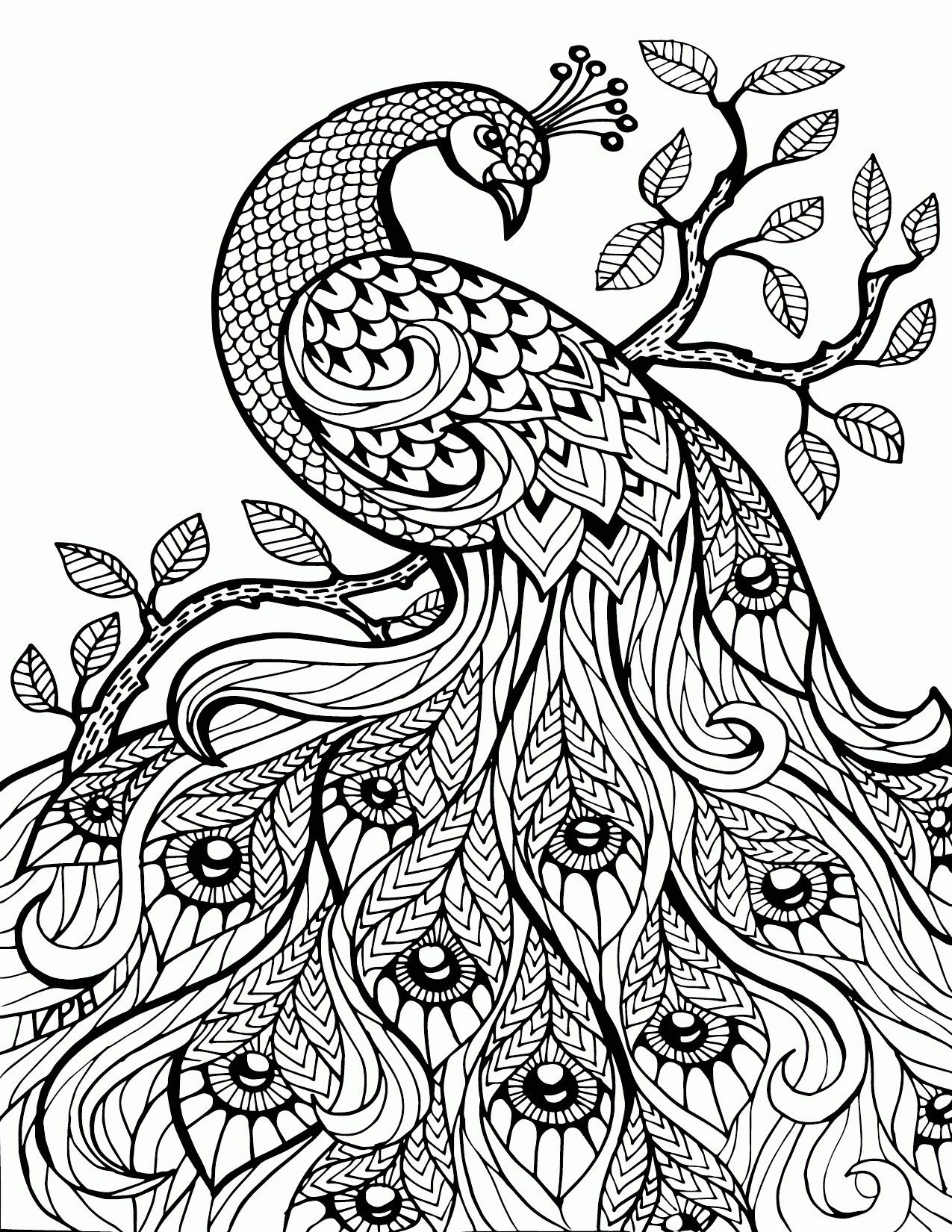 Pin by Stormy Enchantment on peacock Pinterest Adult coloring