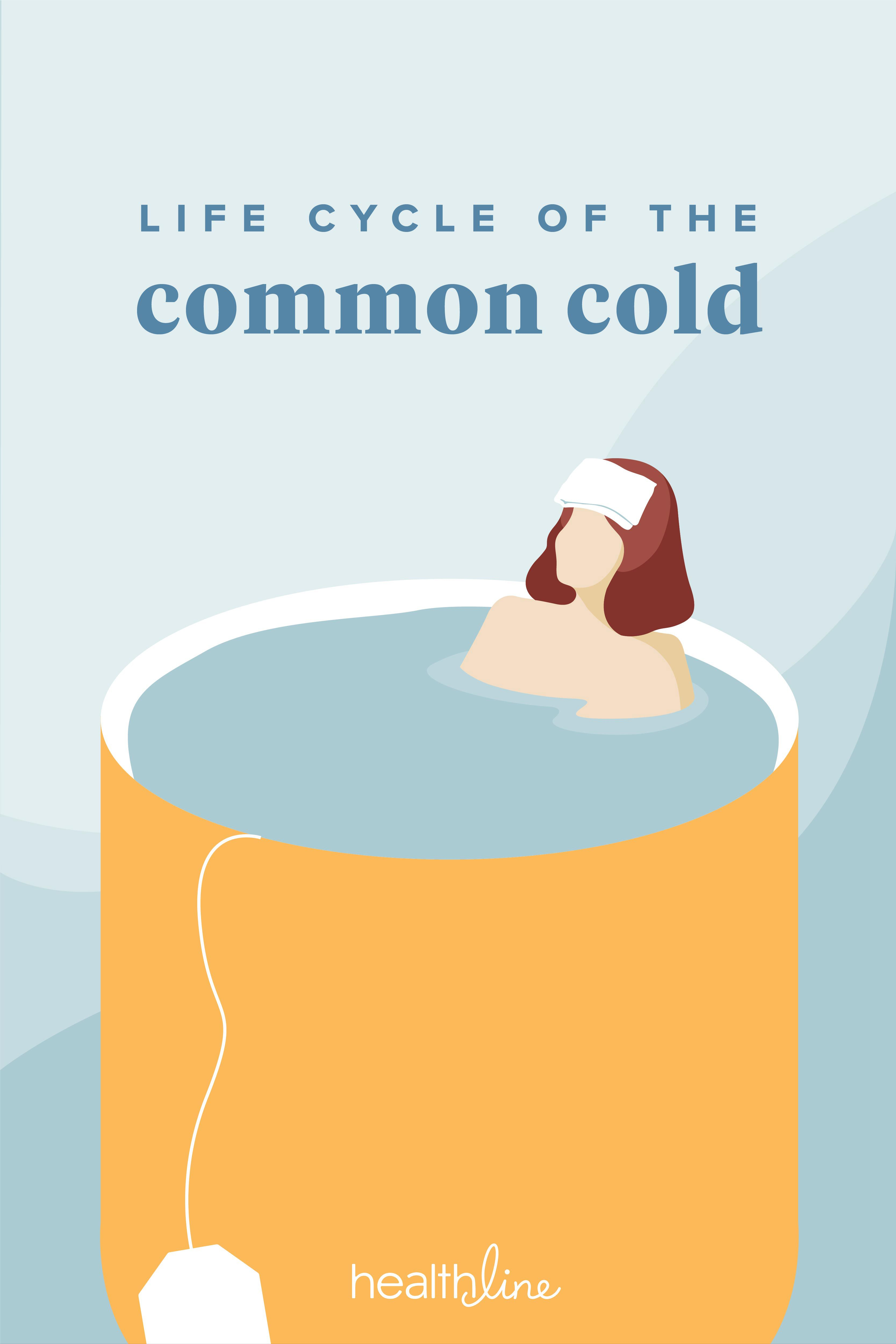 Life Cycle of the Common Cold | Life cycles Cold Life