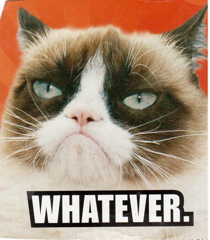Meh.   Funny grumpy cat memes, Grumpy cat, Grumpy cat quotes