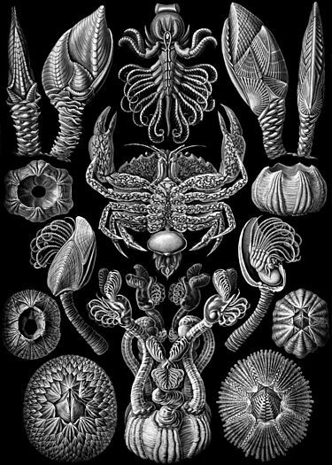 "Ernst Haeckel's ""Kunstformen der Natur"" (Artforms of nature) (1904). https://commons.wikimedia.org/wiki/Kunstformen_der_Natur With zoom: http://algorithmic-worlds.net/Haeckel/haeckel.php"
