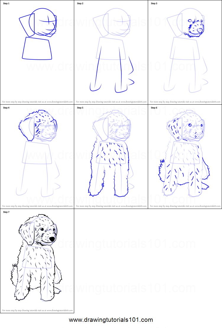 How To Draw A Mini Goldendoodle Printable Drawing Sheet By