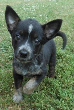 Adopt Scarlett On Super Cute Puppies Dog Lovers Cute Animals