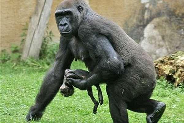 animais em extinção - Pesquisa Google