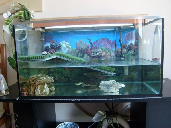Fabrication d cor aquarium tortue aquarium pinterest for Aquarium tortue