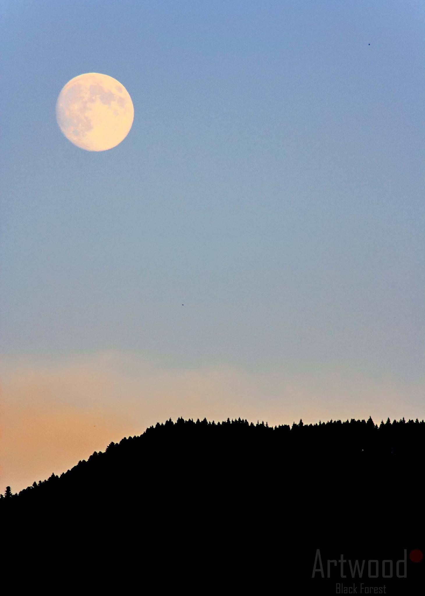 ++ Gute Nacht Schwarzwald ++