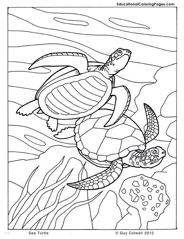 Pin By Andrea Navarova On Pias Turtle Coloring Pages Animal Coloring Pages Ocean Coloring Pages