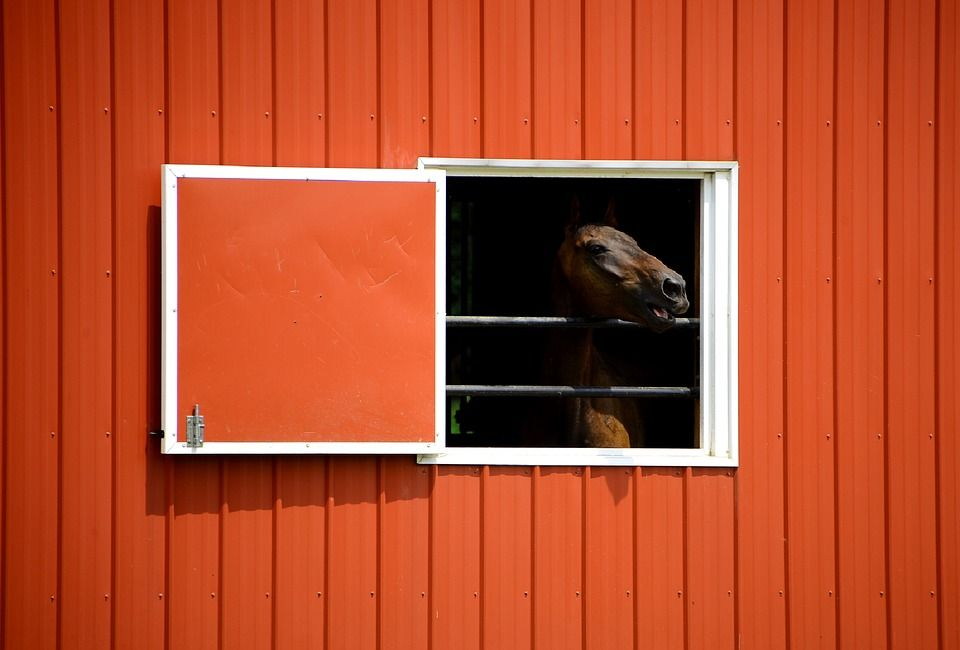 Horse, Barn, Equine, Head, Window, Open, Ranch, Farm