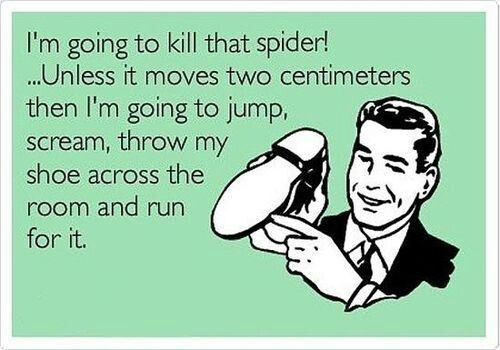 funny pics in-laws hate me | Precisely how spider murder