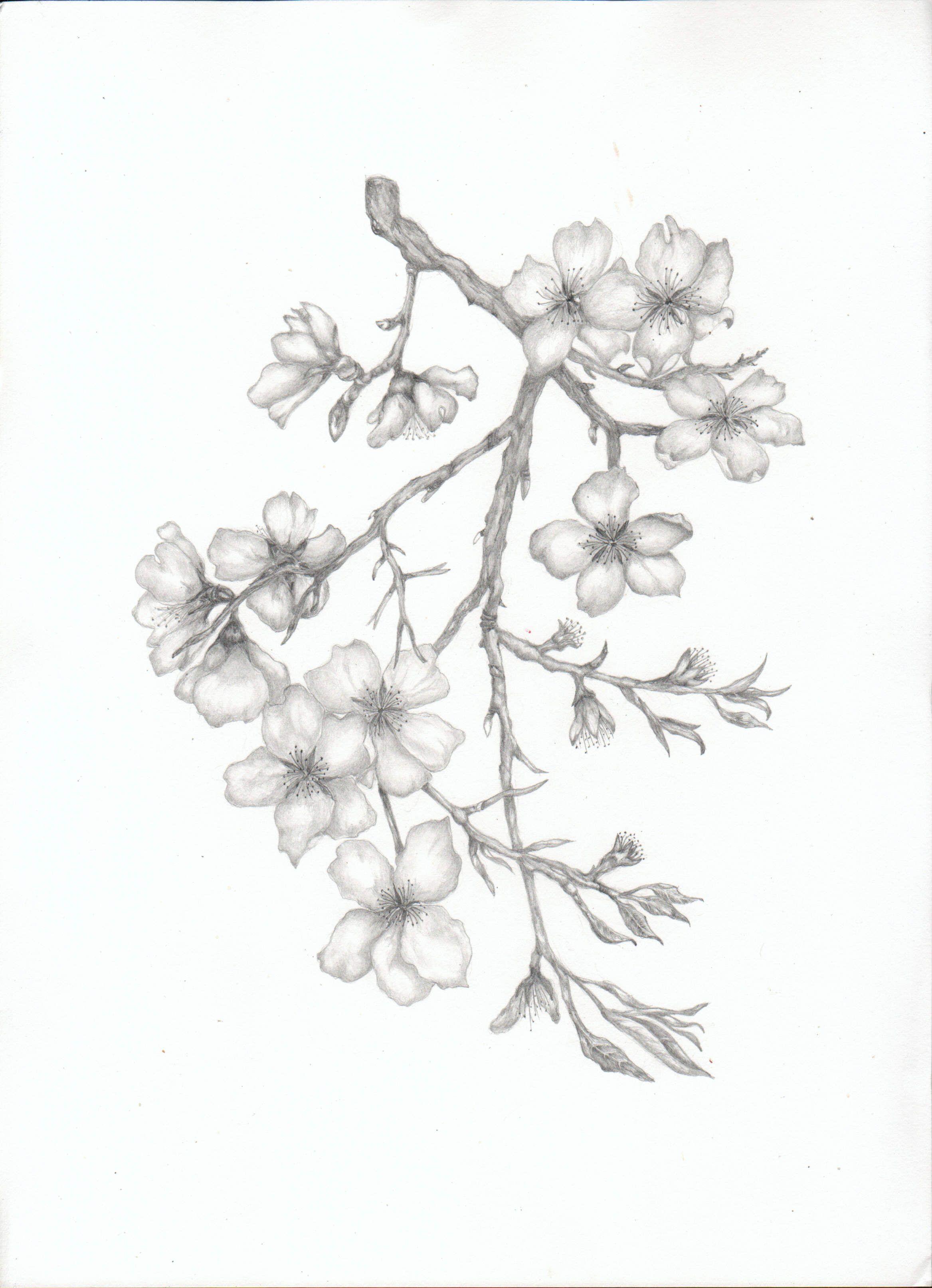 almond blossom branch tats pinterest almonds tattoo and tatting. Black Bedroom Furniture Sets. Home Design Ideas