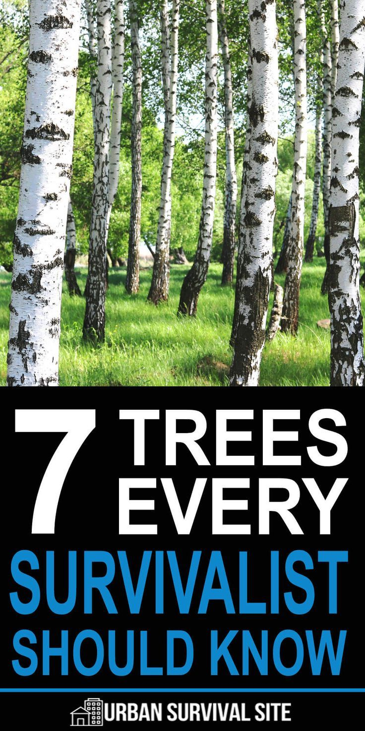 7 Trees Every Survivalist Should Know | Urban Surv