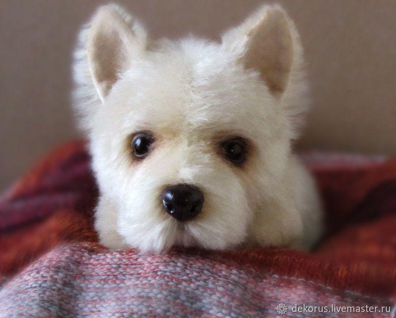 Purebred Puppy Teddy Kupit Na Yarmarke Masterov E3nklcom Teddi Zveryata Buzuluk Puppies Cute Puppies Puppy Care
