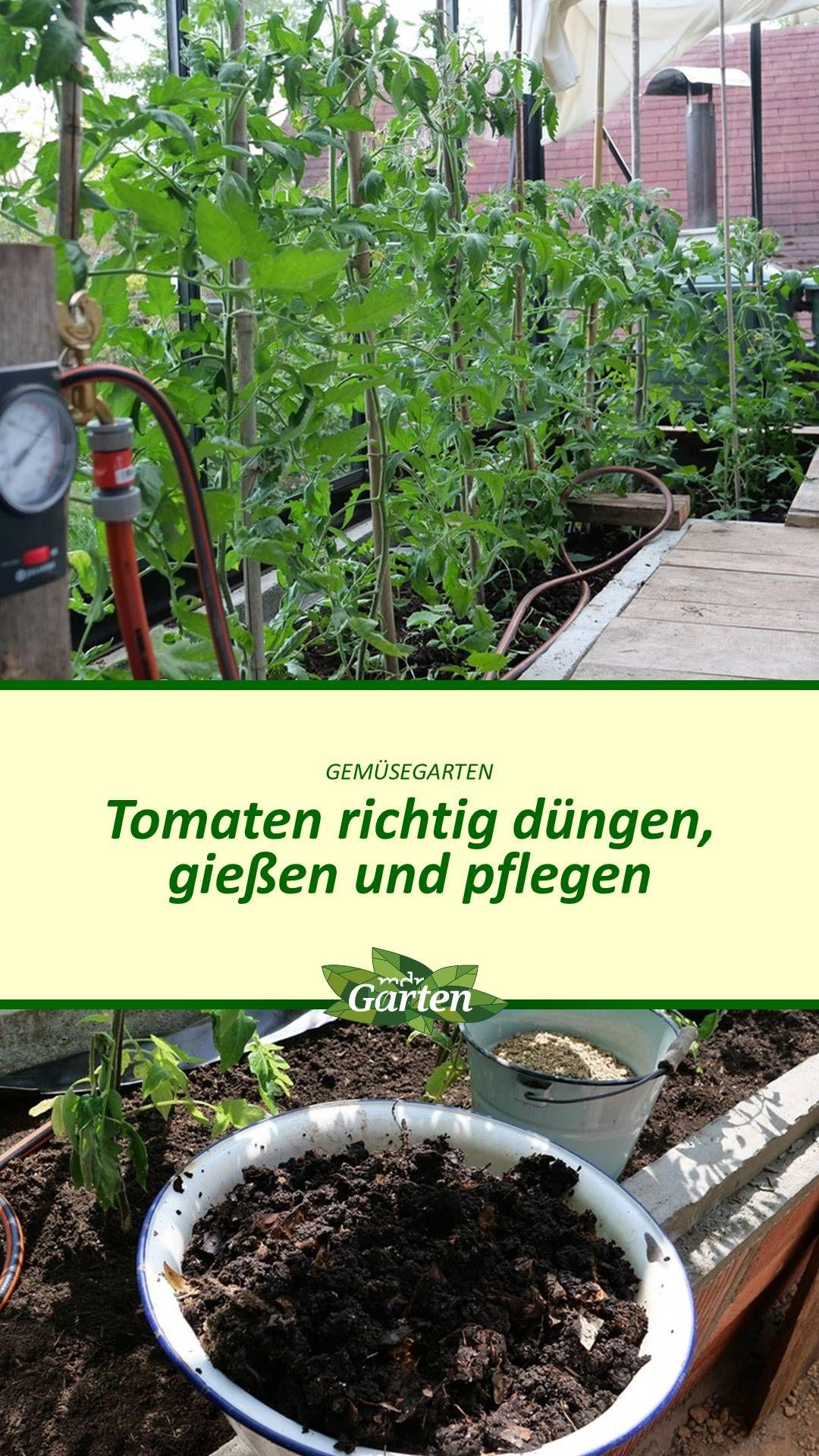 Tomaten Das Ganze Gartenjahr Richtig Versorgen Tomaten Garten Pflanzen Garten