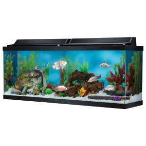 Top Fin 50 Gallon Hooded Aquarium Aquariums Petsmart Fresh Water Fish Tank Fish Tank Sizes Aquarium