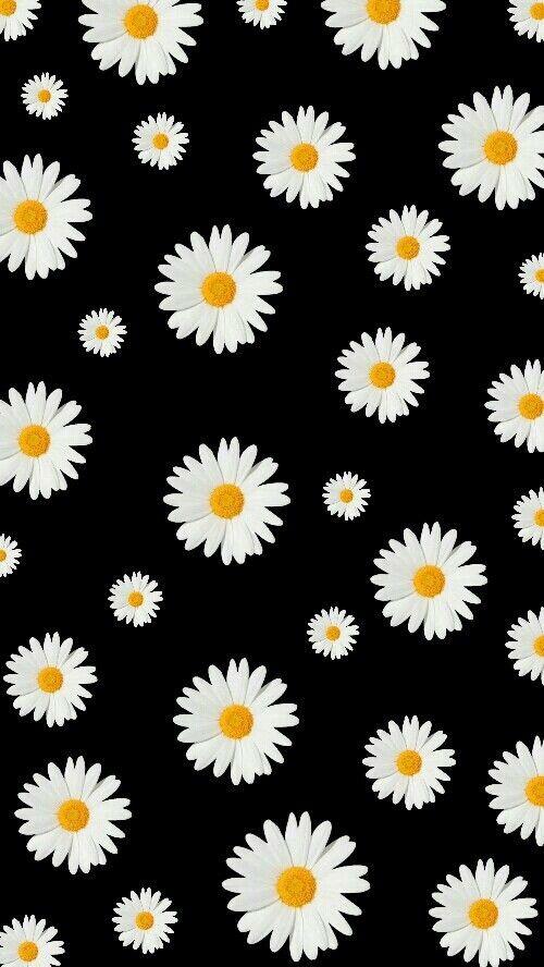 Luv Flower Power Bunga Daisy Latar Belakang Wallpaper Ponsel