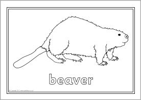 North American animals colouring sheets (SB9074