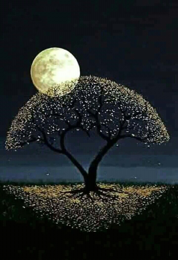 Pin de Di Di en desen   Pinterest   Noche