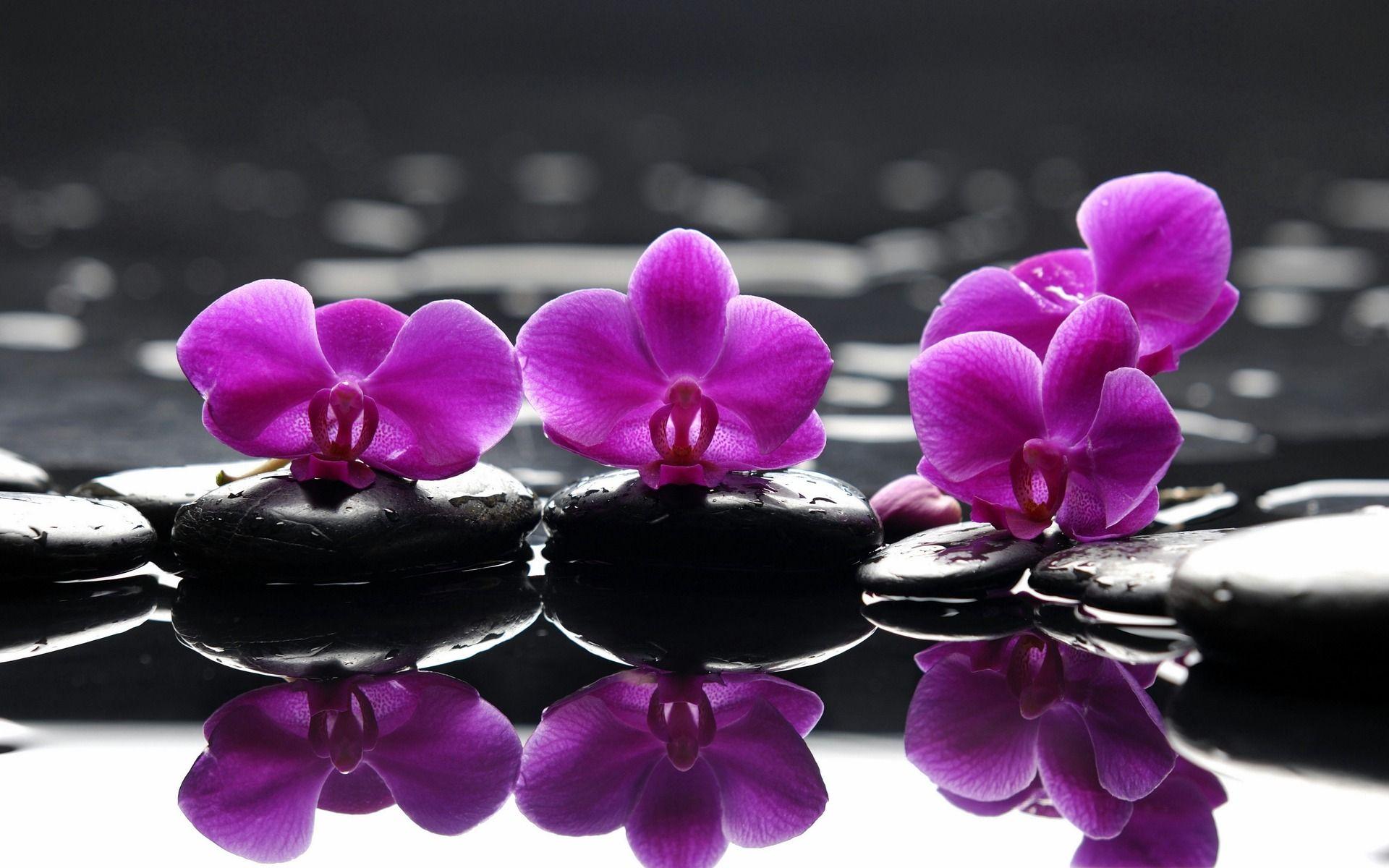 Exotic purple inspiration perfect purple pinterest exotic