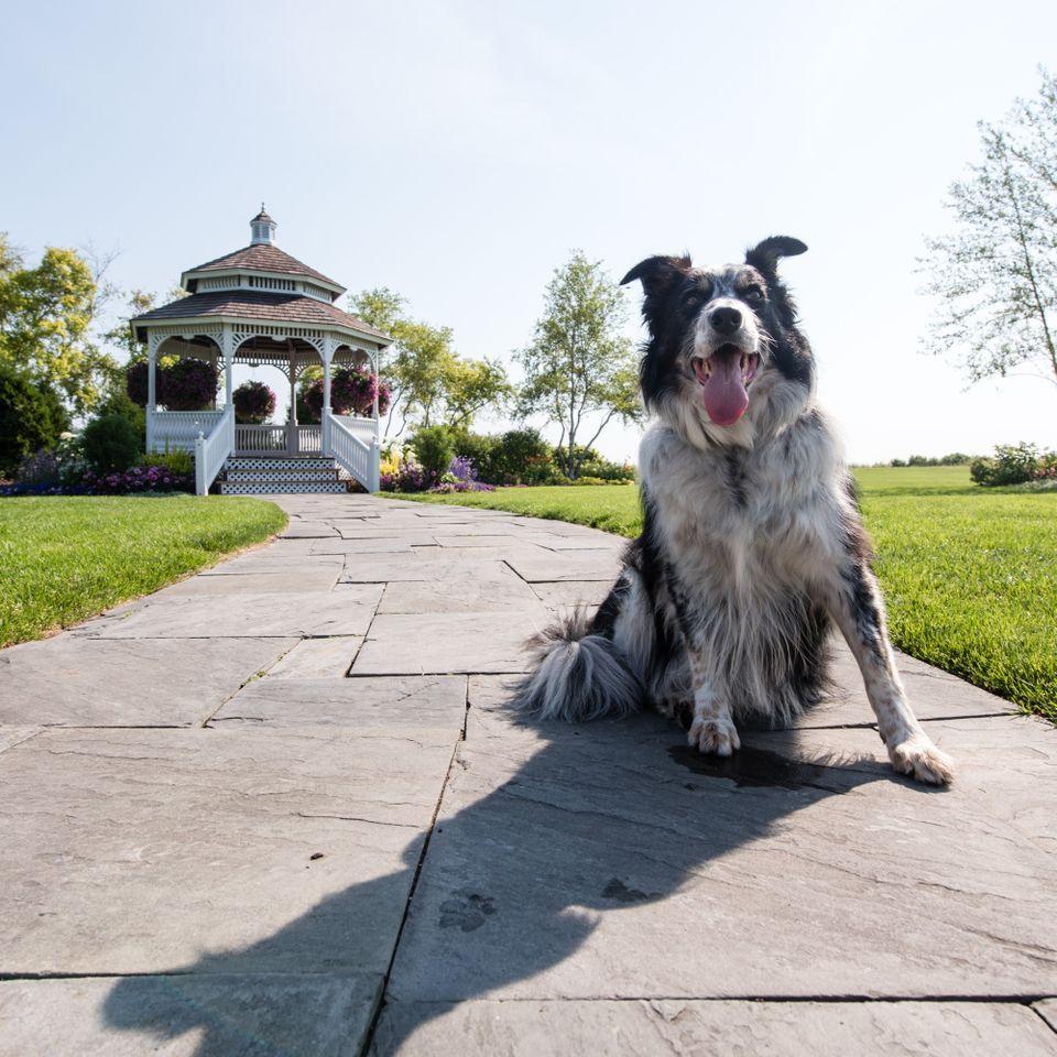 Mission Point S Bird Chasing Dog A Celebrity On Mackinac Island Dog Friends Dogs Mackinac Island