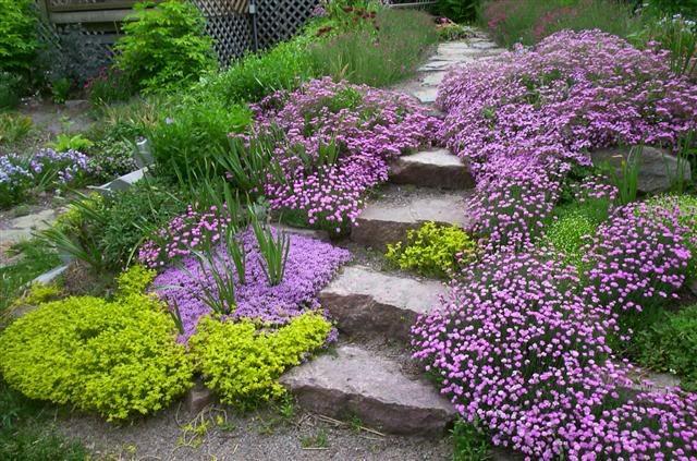 jardin en pente la saponaire jardin jardins plante. Black Bedroom Furniture Sets. Home Design Ideas